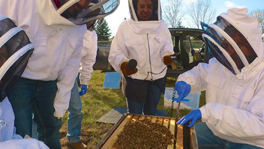 MINNPOST: The U of M program that helps military veterans — through beekeeping